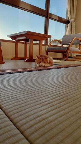 畳のお部屋で、ゆっくりだにゃん(*^-^*)