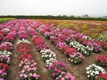 【富良野】たくさんのキレイな花々をご覧いただけます