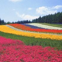 夏が一番の見頃!富良野ラベンダー畑♪鮮やかな自然のアートをお楽しみください。富良野まで車で40分