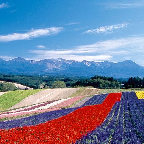 """『美しい日本のむら景観百選』にも選ばれた、美瑛町。四季折々の美景に""""感動""""♪美瑛町まで車で60分"""