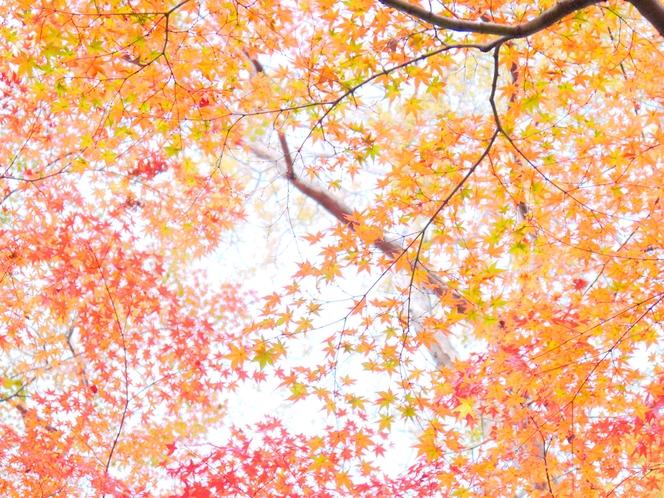 紅葉の郷【11月下旬~】