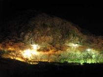 梅の宴ライトアップ【2月上旬~3月下旬】