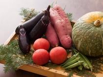 新鮮獲れたて地元の野菜