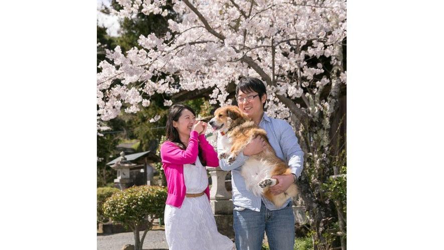 【わんこ家竹亭】お隣の『湯神社』の桜が満開♪