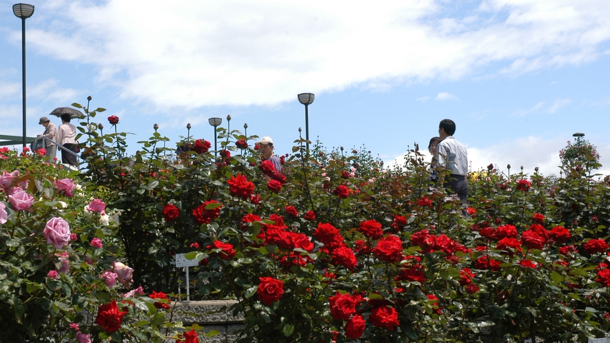 緑町公園(写真提供:広島県)