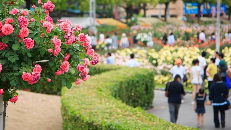ばら公園(写真提供:広島県)