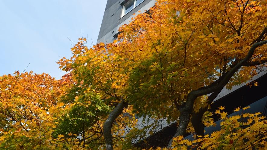 【日本庭園】<秋>の日差しに照らされ輝く紅葉の木々