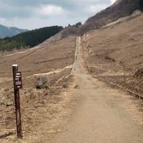 *仙石原の台が岳に於いて毎年3月に野焼きをしております。