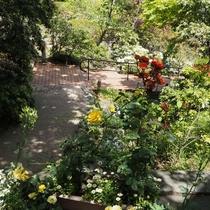 *【強羅公園】花と緑に囲まれた庭園です。