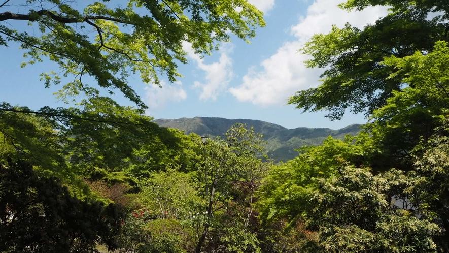 *【周辺観光】当館より車で15分ほど。緑豊かな景観が美しい強羅公園。