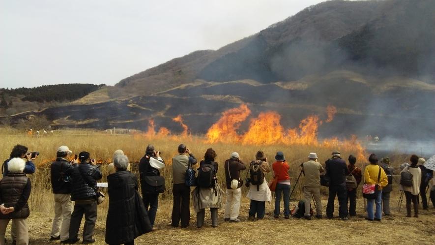 *【周辺観光】毎年3月中旬~下旬に、仙石原すすき草原の山焼きが行われます。