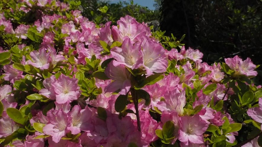 *【周辺観光】強羅公園で、花や噴水、ローズガーデンを散策してみては♪