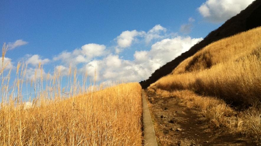 *【周辺観光】一面に黄金の絨毯が広がる、仙石原のすすき草原。