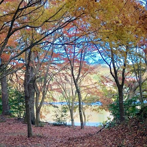 一碧湖の秋、紅葉