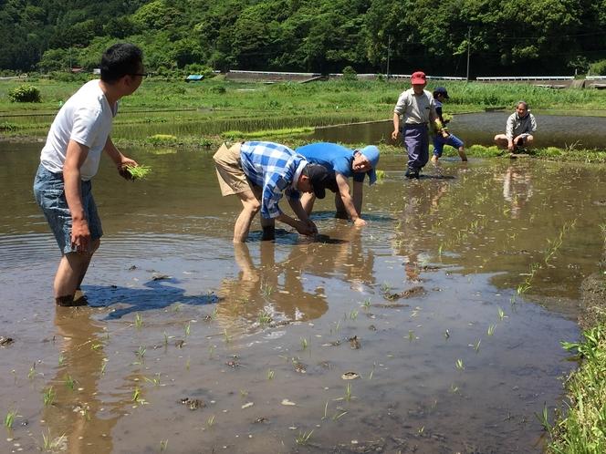 池の田んぼ