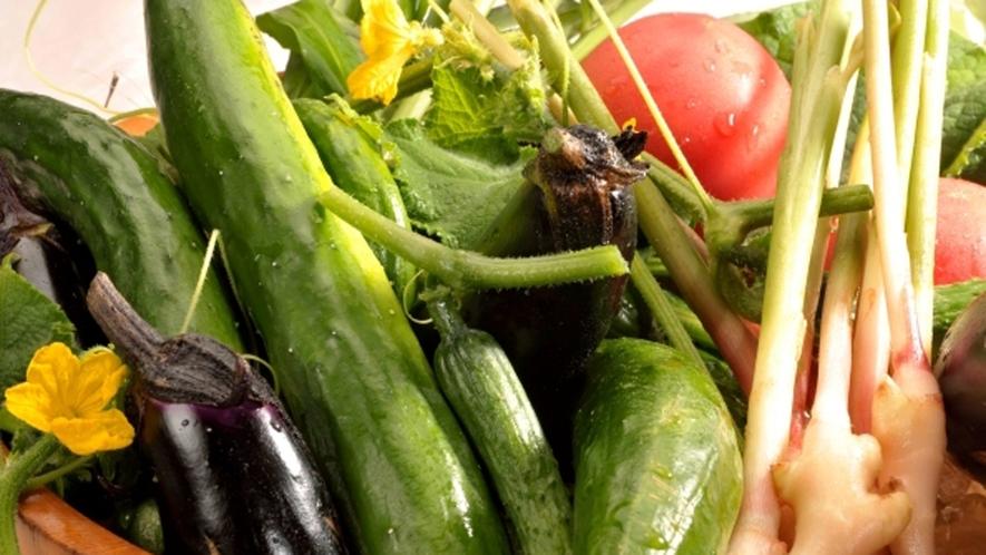 地元産の新鮮野菜