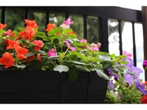 四季折々の花