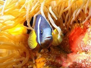 美ら海水族館には色鮮やかなお魚がたくさん♪