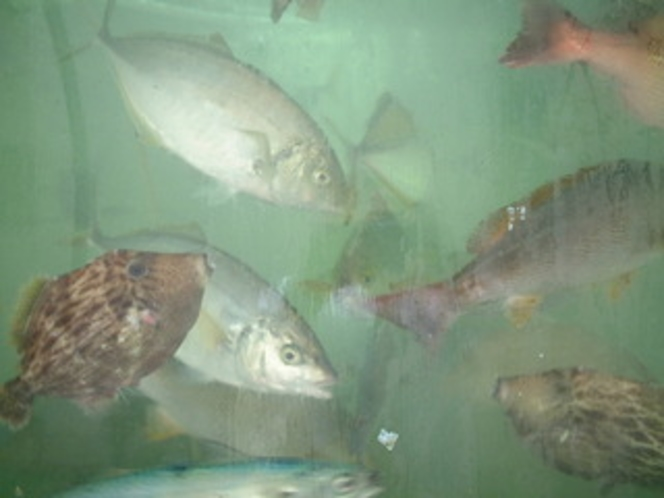 長崎のお魚は美味い!(イメージ)