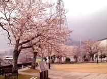 桜満開の西坂公園(日本二十六聖人殉教地)