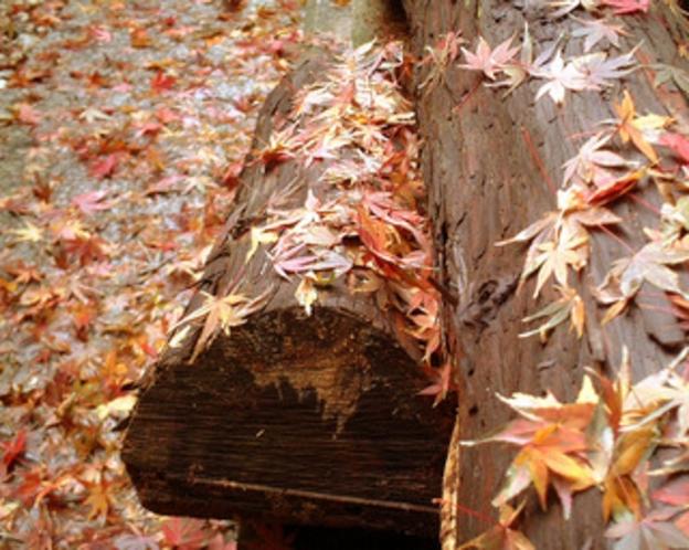 秋のイメージ(落ち葉)