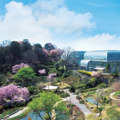 【周辺観光】高知県立牧野植物園まで当館からお車で約20分