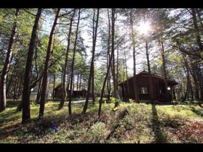 国立公園の自然に囲まれたプライベートコテージ(ログタイプ)外観2