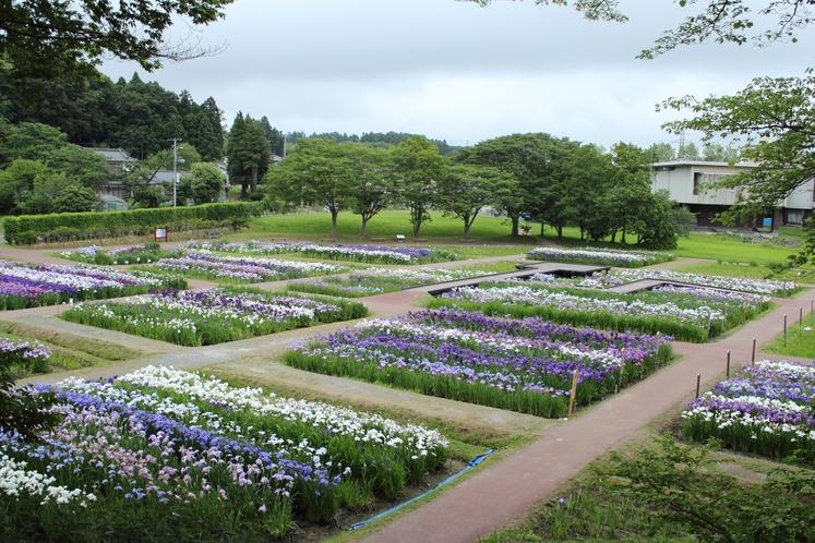 多賀城跡のあやめ園
