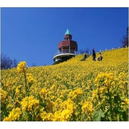新居浜から一足伸ばして:標高892メートルに広がる100ヘクタールの花の楽園、翠波高原。
