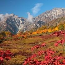 栂池自然園(秋)