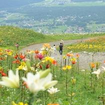 岩岳ゆり園の入園券+往復乗車券付◆大人気の信州バイキング