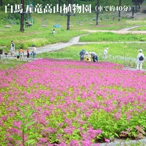 白馬五竜高山植物園(車で約40分)