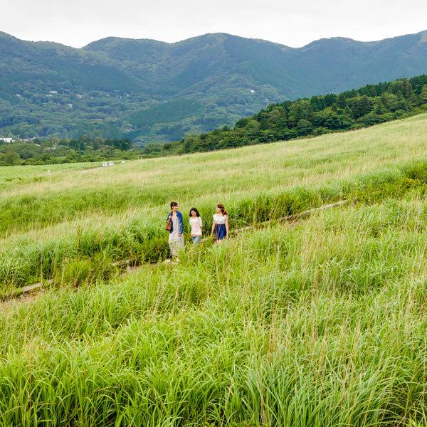 仙石原すすき草原(お車で約10分)