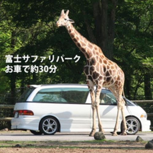 きりん:富士サファリパークへお車で約30分