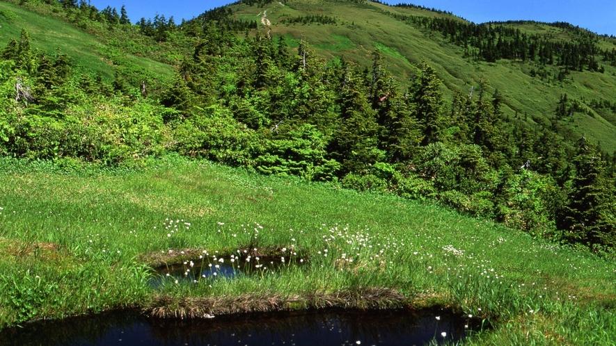夏の駒ヶ岳。