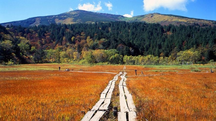 美しい尾瀬ヶ原をトレッキングで楽しむ。