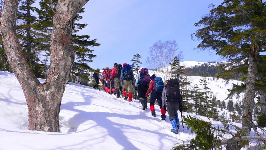 冬季はスノートレッキングもお楽しみいただけます。