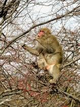 当館裏に現れた猿