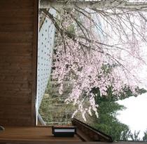 お部屋からの桜