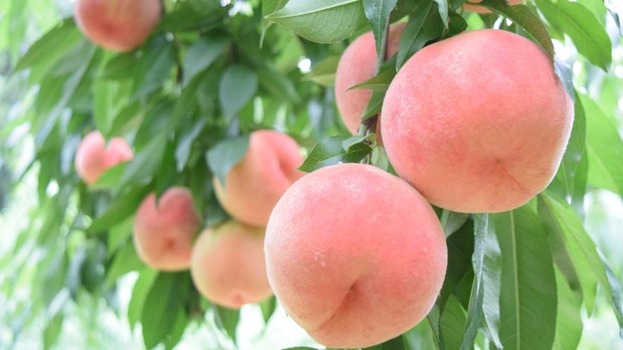 ◆桃狩り◆甘くて美味しい桃!香りも楽しめます!