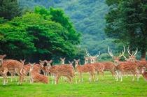 姫路セントラルパーク 園内鹿