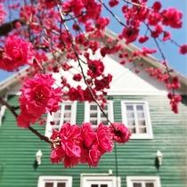 【外観】季節の花に彩られ・・・