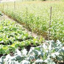 *【周辺】自家畑で育てた野菜を使って、手作り料理の数々をご用意します。