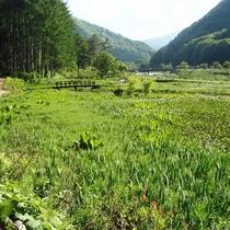 *【周辺】長い冬を越えて、雪どけが始まると、新緑や草花の群生が姿を現します。