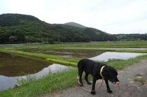 池の里の田園風景
