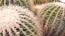 *サボテン/場内には多種多様な植物をご覧いただけます