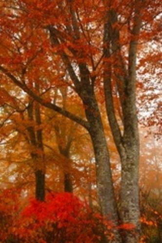 野沢温泉の紅葉