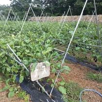 直営農場『秩父ふるさと村』で育てている野菜たち