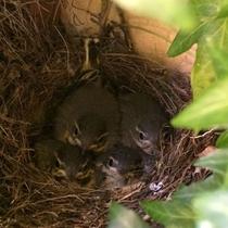 巣も狭くなってきました