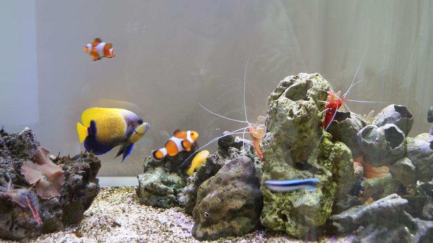 海水魚は色鮮やか。